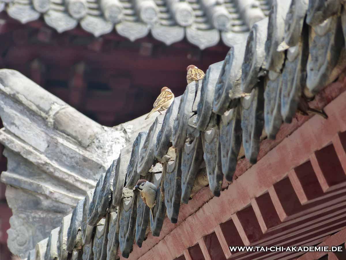 Kann die Kampfkunst unseren eigenen Geist zu einer Zuflucht formen, wie der Shaolin-Tempel eine Zuflucht für viele Lebewesen ist?